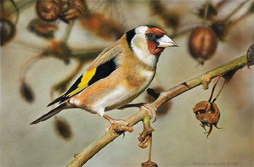 Bird Painting - Goldfinch