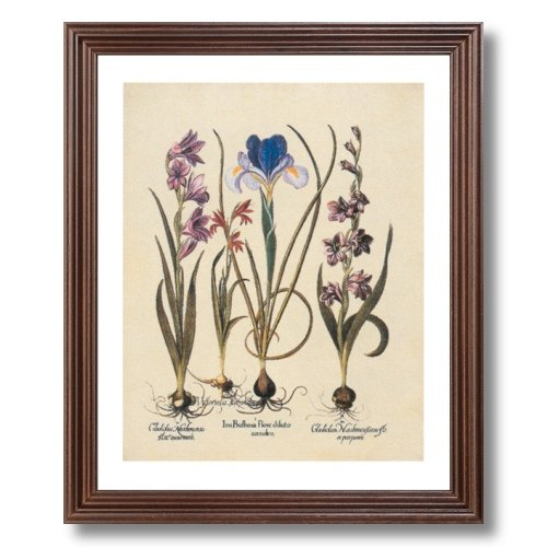 Framed Cherry French Iris Flower Bulb Irises Contemporary Pictures Art Print