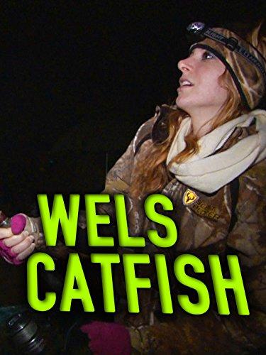 Clip: Wels Catfish