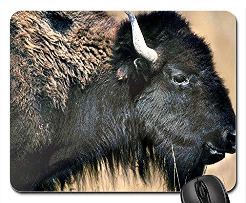 American Bison Range