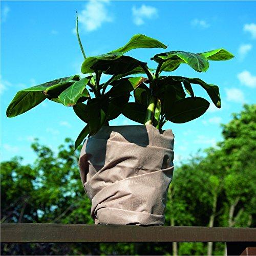 Frostschutzvlies 0,5x6m Topfschutz Vlies Winterschutz Frostschutz Pflanzenkübel