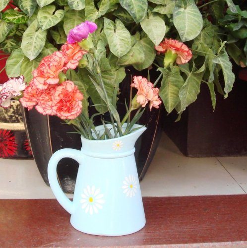 Garden XP Ceramic Daisy Jug Planters