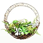 Succulents In Hanging Basket