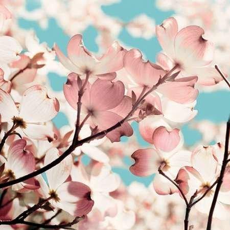 impresion-de-arte-fino-en-lienzo-adorn-i-by-joy-olivia-pequena-46-x-46-cms