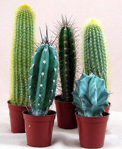 Instant Cactus Collection - 5 Different Plants - 2.25