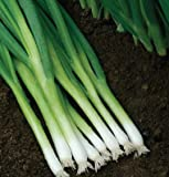 OMAXE BUNCHING ONION SPRING CUT VARIETY !!SOLD BY RAUNAK SEEDS, DELHI !! !!AVG 30-50 SEEDS!! X 3 PACKETS