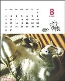 ゆめみるミーちゃん/平間至2009カレンダー C-213-ME