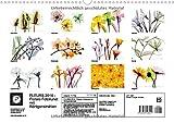Image de FLEURS 2016 - Florale Fotokunst mit Röntgenstrahlen (Wandkalender 2016 DIN A3 quer): Jenseits des L