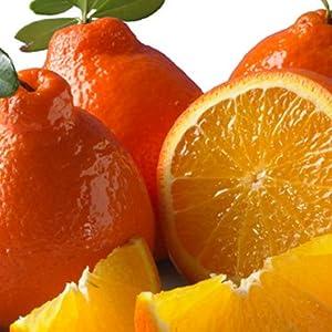 Honeybell Oranges (Tangelos) 1/2 Bushel
