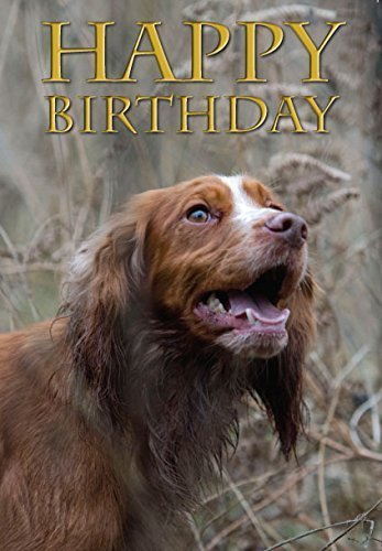 working-cocker-spaniel-dog-birthday-card-perfect-for-people-who-like-cockers-shooting-and-field-spor
