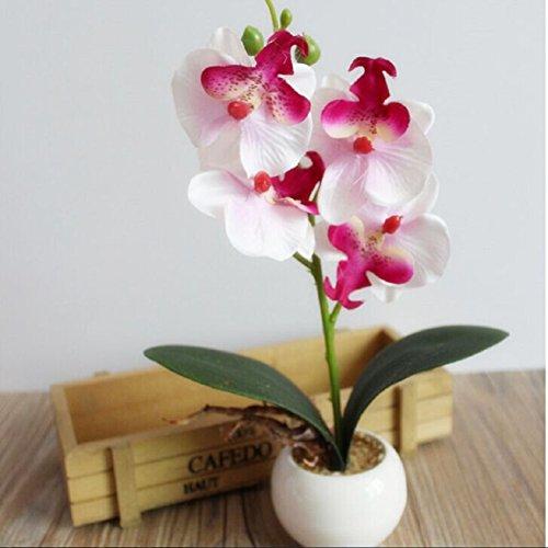 malloom-quatre-orchidee-papillon-charnu-bonsai-fleur-creatif-accessoires-organisation-blanc