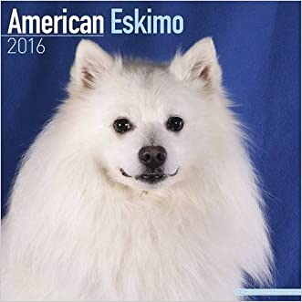 American Eskimo Dog Calendar - Breed Specific American Eskimos Calendar - 2016 Wall calendars - Dog Calendars - Monthly Wall Calendar by Avonside