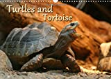 Turtles and Tortoise / UK-Version: Beautiful Photos of Turtles on Land and Water (Calvendo Animals)