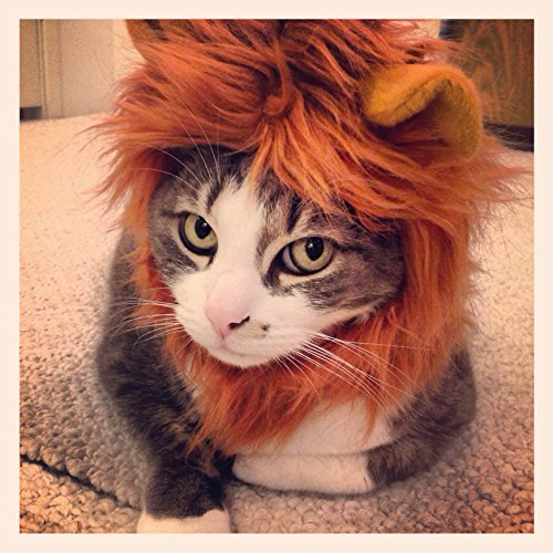 "Jungle King Lion Hat for Cats and Dogs (7-11"")"