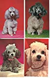 Group of 9 Poodles variety of colors sizes vintage greetings postcards Z3998