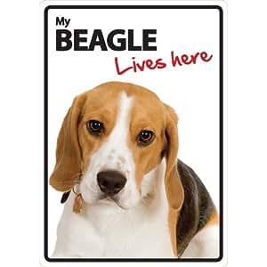 Amazon.com : Magnet & Steel Beagle Lives Here Plastic Sign : Pet