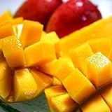 2011年予約受付中!7月下旬~8月上旬の順次発送!日時指定は不可でございます。【送料込】沖縄完熟マンゴー2kg送料込み数量自宅用にいかがですか。