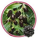 Best Garden Seeds Lycium Ruthenicum Black Goji Wolfberry With Black Skin, Original Pack, 30 Seeds, Chinese Herbal Medlar
