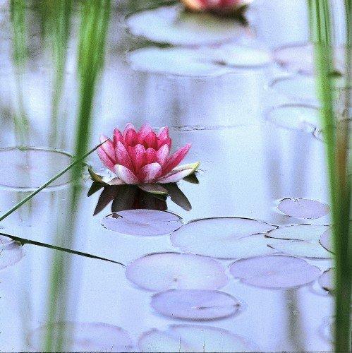 Teichschalen oase for Fertigteich tief