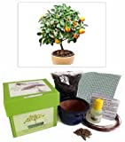 Citrus Tree Bonsai Kit - CERAMIC Pot/Seeds/Soil/Liquid Fertilizer/Training Wire/Drainage whole cover/Extra Seeds/Gift Tag