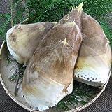 和歌山県産朝堀たけのこ(ぬか付き) 約4kg  4月上旬より順次出荷