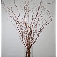 Green Floral Crafts Fresh Cut or Dried Curly Willow 3-6 Ft Tall, Bunch of 7-10