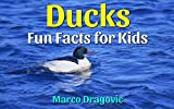Ducks: Fun Facts for Kids, Picture Books for Kids, Amazing Pictures and Interesting Facts About Ducks! (English Edition)