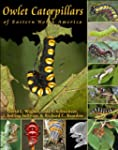 Owlet Caterpillars of Eastern North A...