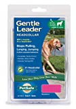 Premier Gentle Leader Quick Release Headcollar, Large, Raspberry