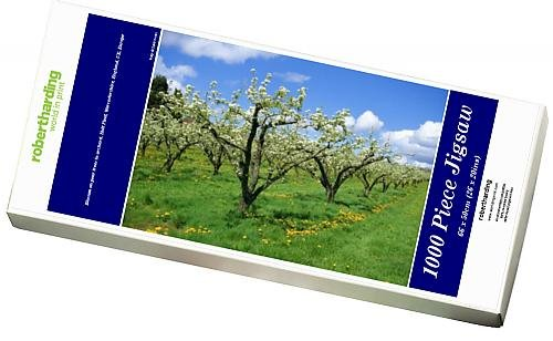 photo-jigsaw-puzzle-of-blossom-on-pear-trees-in-orchard-holt-fleet-worcestershire-england-uk