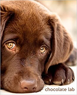Chocolate Lab: A Gift Journal for People who Love Dogs
