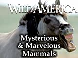 Wild America: Mysterious & Marvelous Mammals Collection