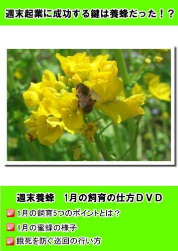 2011年度版 週末養蜂1月 [DVD]