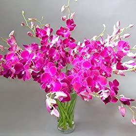 Long Stem Red Sonia Dendrobium Orchid Flowers