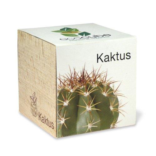 ecocube-holzwuerfel-kaktus