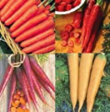 4 Packs of CARROT Seeds - Early Nantes, Purple, Yellow , Red