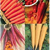 4 Packs of CARROT Seeds - Early Nantes, Purple, Yellow , Redby Haddons