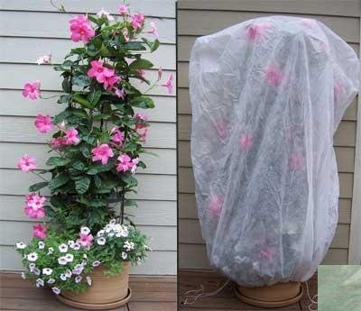 bag-xl-frost-protection-plant-cover-green