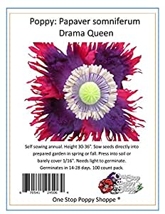 100 Drama Queen Poppies. Papaver by One Stop Poppy Shoppe.