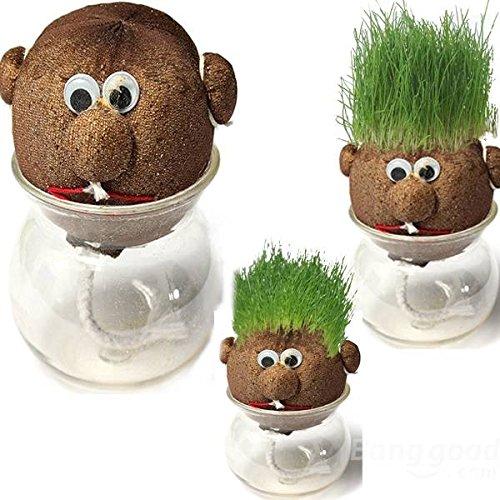 paleo-mini-cabeza-de-muneca-diy-olla-hierba-planta-de-la-hierba-magica-planta-en-maceta-de-interior
