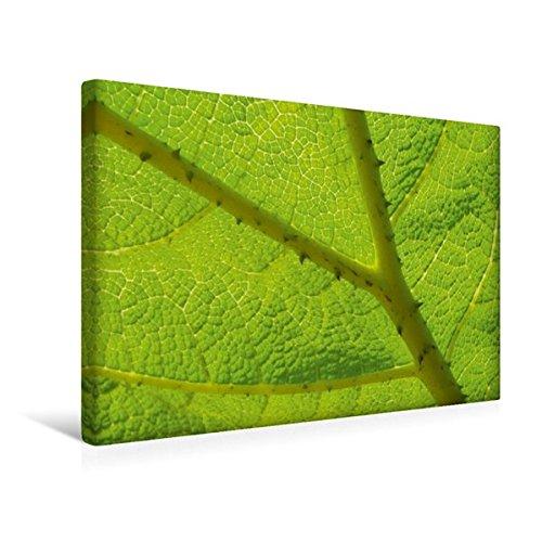 premium-textil-leinwand-45-cm-x-30-cm-quer-schirmblatt-wandbild-bild-auf-keilrahmen-fertigbild-auf-e