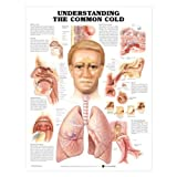Understanding the Common Cold Chart, Laminated