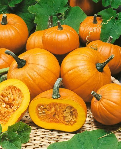 Baby Bear Pumpkin Seeds - Cucurbita Pepo - 4 Grams - Approx 30 Gardening Seeds - Vegetable Garden Seed