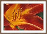 WallsnArt, Flower Modern Framed Art Work Painting With Glass,Hemerocallis 'Cynthia May', Daylily