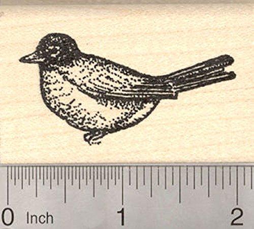 American Robin Rubber Stamp, Migratory Songbird Bird, Thrush