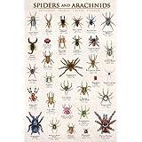 Spiders & Arachnids Art Poster