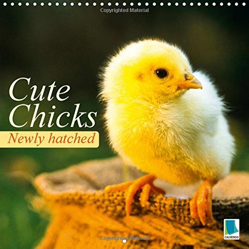 Newly Hatched: Cute Chicks: Baby Chicks from an Egg (Calvendo Animals)