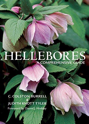 Hellebores: A Comprehensive Guide