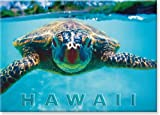 Honu (Hawaii Sea Turtle) by Kirk Lee Aeder - Hawaiian Art Collectible Refri ....