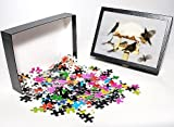 Photo Jigsaw Puzzle of Bird Feeding Station – attracting various birds in winter from Ardea Wildlife Pets